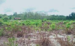 Kondisi  Terkini Lapangan Bola Desa Linggam Yang Diduga Fiktif Pengerjaan nya
